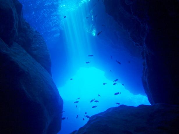 カロ冬扇へようこそ 今月の猫 海底の化石かすかに夏の風邪