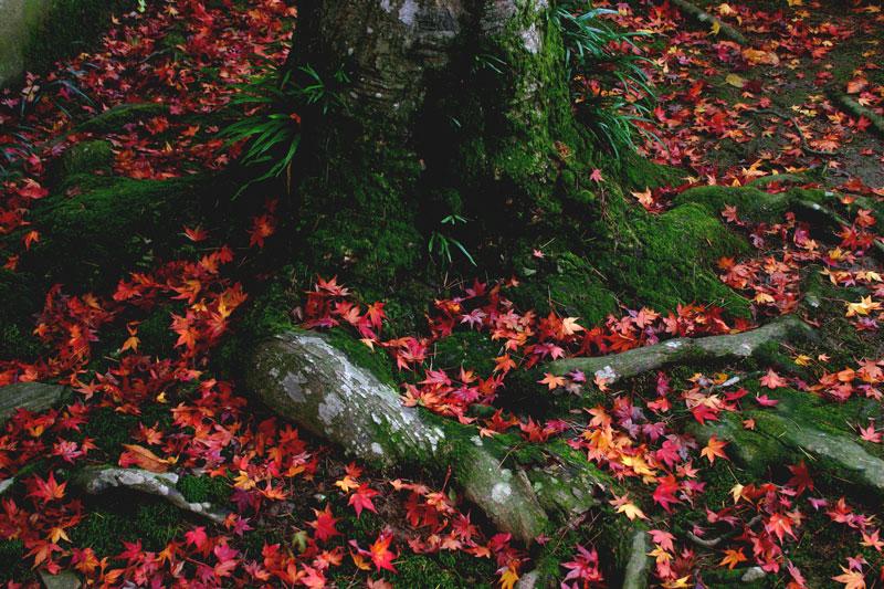 秋のなごり (香川県 高松市 中山町 五色台 根香寺)