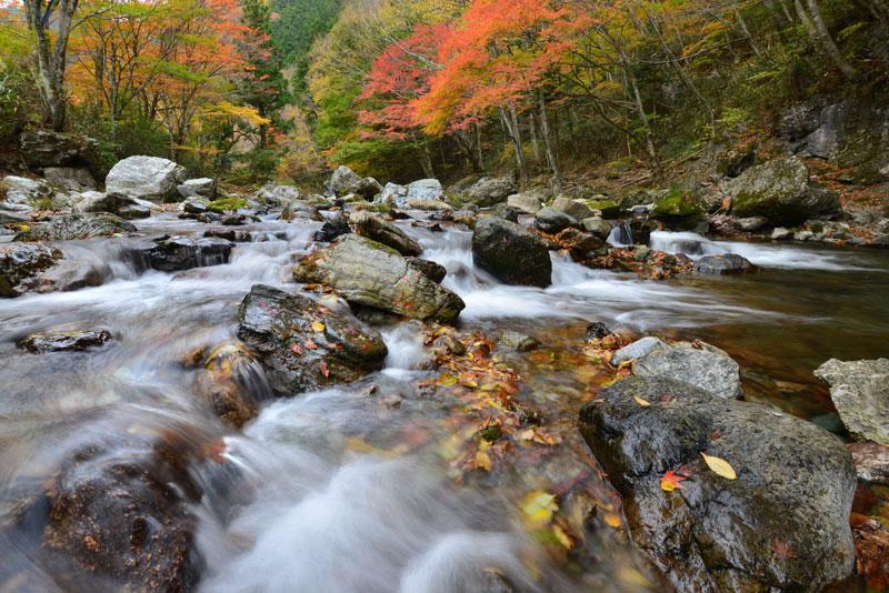 秋色の渓谷 (愛媛県 喜多郡 内子町 小田深山渓谷)