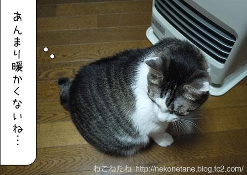 あんまり暖かくないね…