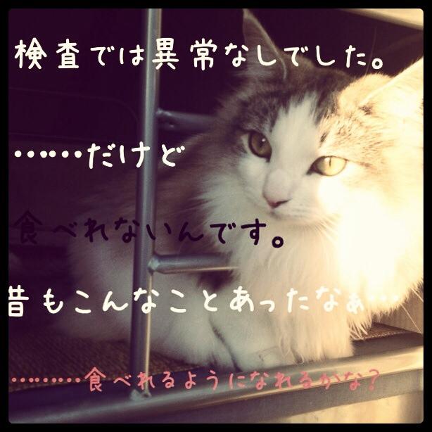 fc2blog_20131213023640d6a.jpg