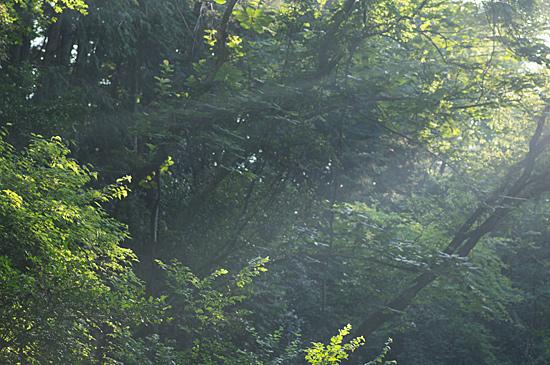 海上の森-5