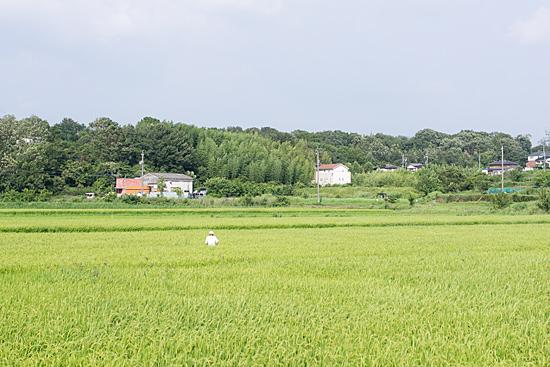 夏の風景-1
