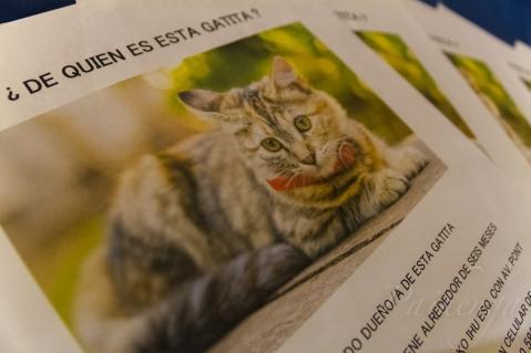 """""""何方の猫ですかー?"""" ポスター"""