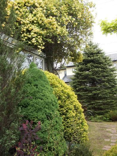 my-garden 007 (3)