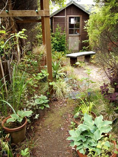 my-garden 025 (3)