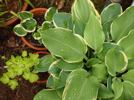 my-garden 156