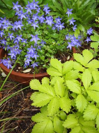 my-garden 010