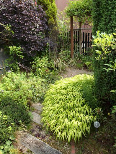 my-garden 029