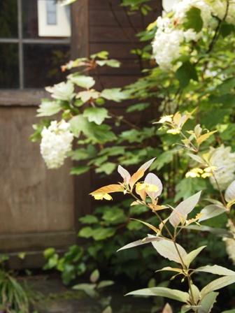 my-garden 031 (3)