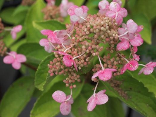 my-garden 002 (5)