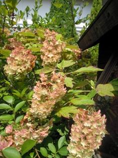 my-garden 049