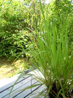 my-garden 081 (2)