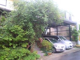 my-garden 038