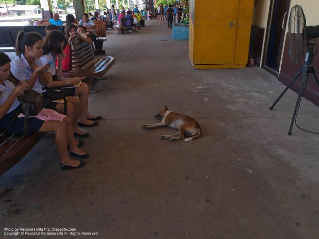 アユタヤ駅 (Ayutthaya Sta.)内で昼寝をする犬