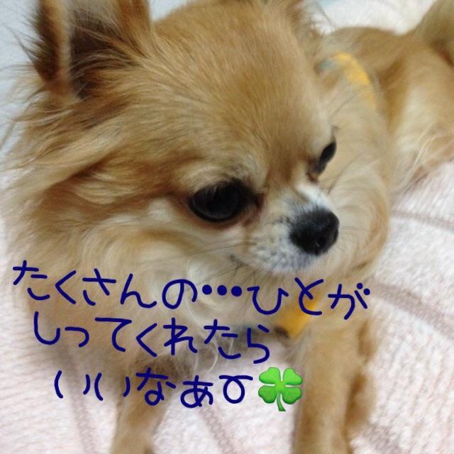 20141114224753896.jpg