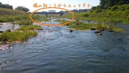 201307101039436e7.jpg