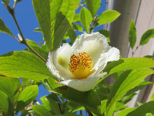 flowerinjuly_1.jpg