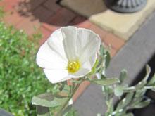 flowerinjuly_2.jpg