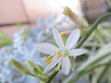 flowerinjuly_8.jpg