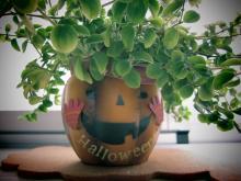 halloweenkazari2013_4.jpg