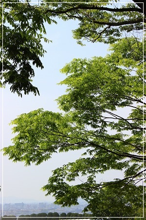 緑香る、5月