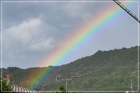 雨上がり、虹出てたよー♪