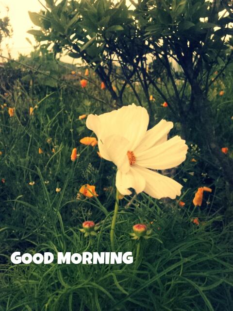 PicsArt_1373987607030.jpg