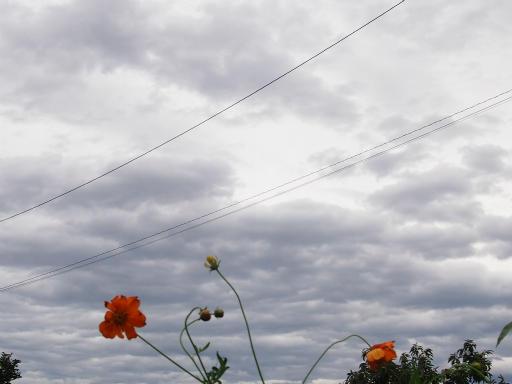20130916・小手指散歩植物2