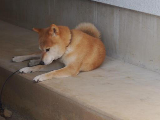 20130921・群馬墓参り2-03
