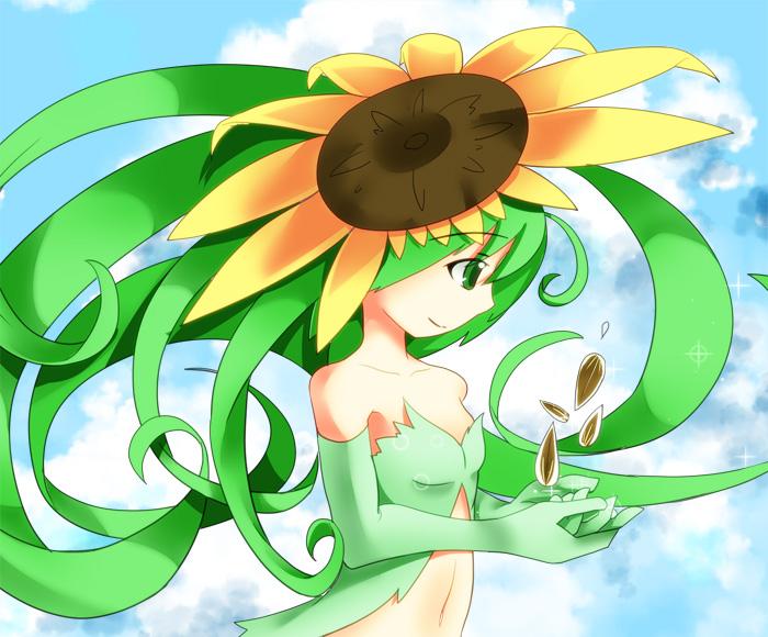 sunflower01.jpg