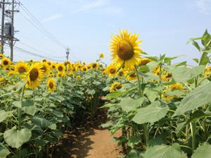 himawarimura_open2.jpg