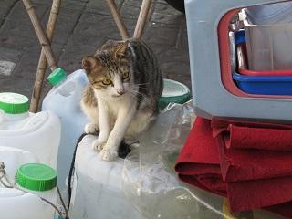 catbacket.jpg